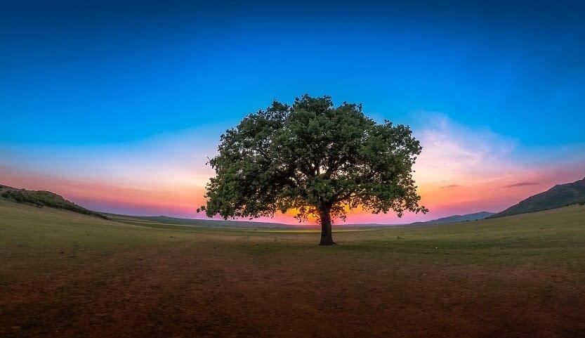 Sunset tree of life