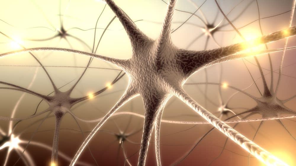 Neurotransmitters & Neurohormones